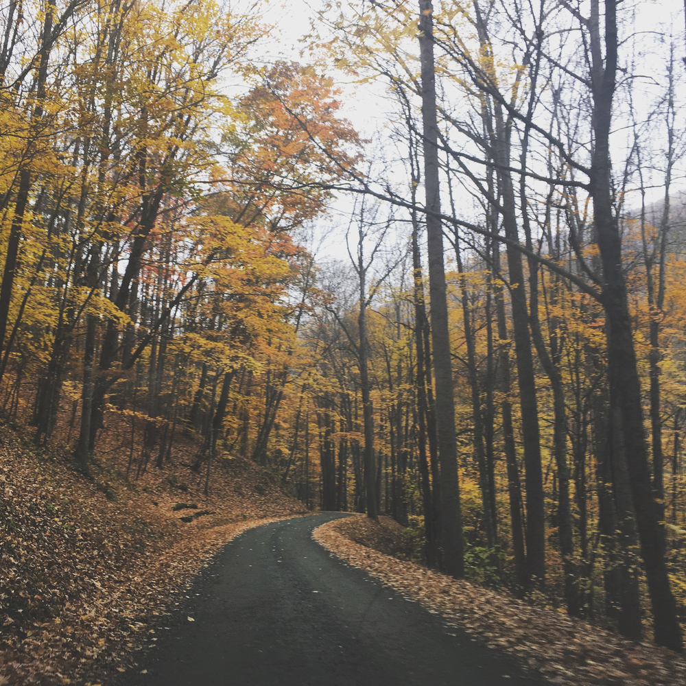 Fall_North_Carolina_Charlotte_Photographer-3-2.jpg