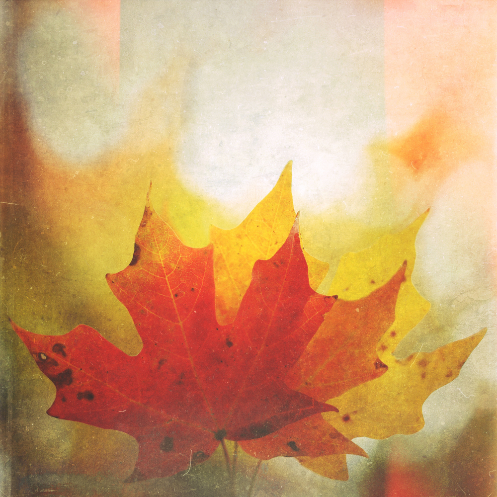 Fall_North_Carolina_Charlotte_Photographer-4-2.jpg