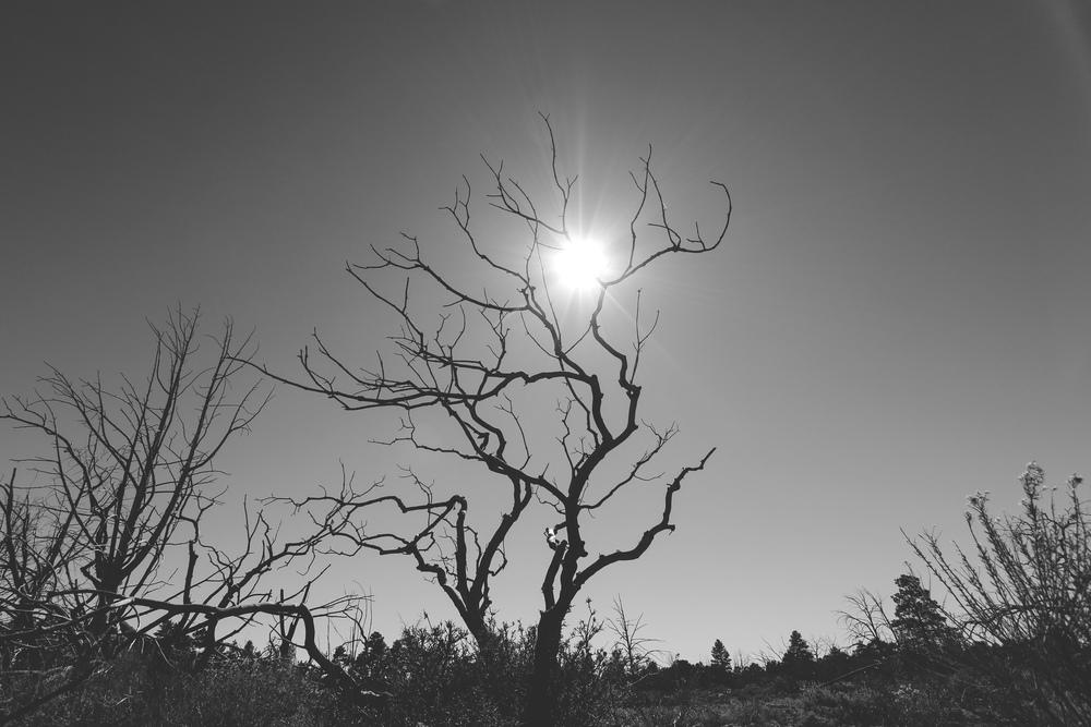 Desert View Drive - Jon Courville
