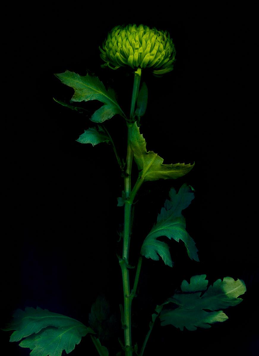 Flower Scans-1.jpg
