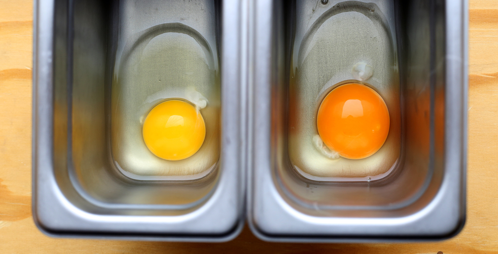Store-Bought vs. Our Fresh Chicken Eggs