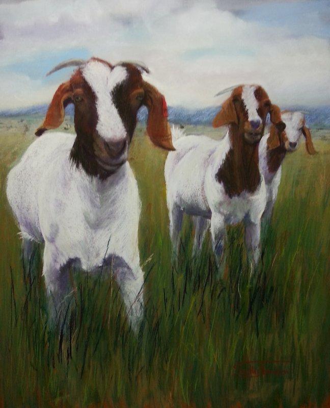 Inquisitive Goats
