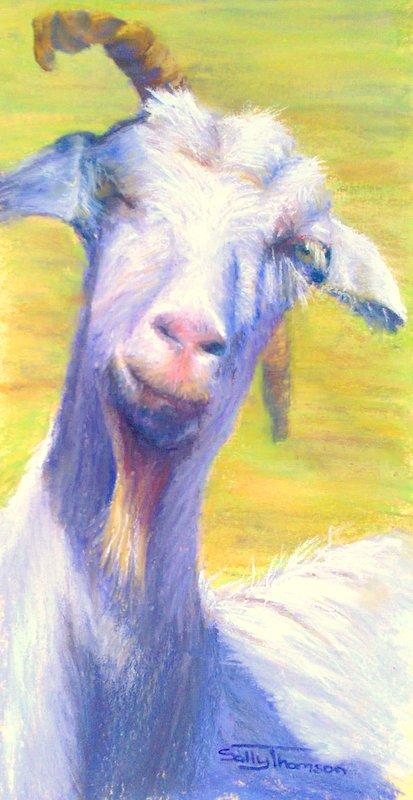 A goat's Life