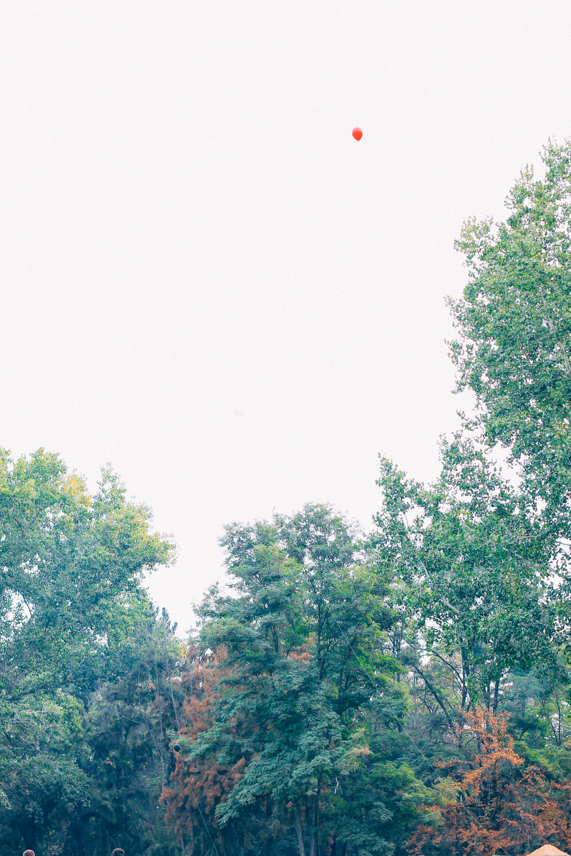 IMG_1992.jpg