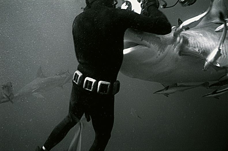 My dad always said you need to get close to your subjects...Thomas Peschak with Tiger Shark in South Africa.  Photo by Wolfgang Leander 2007