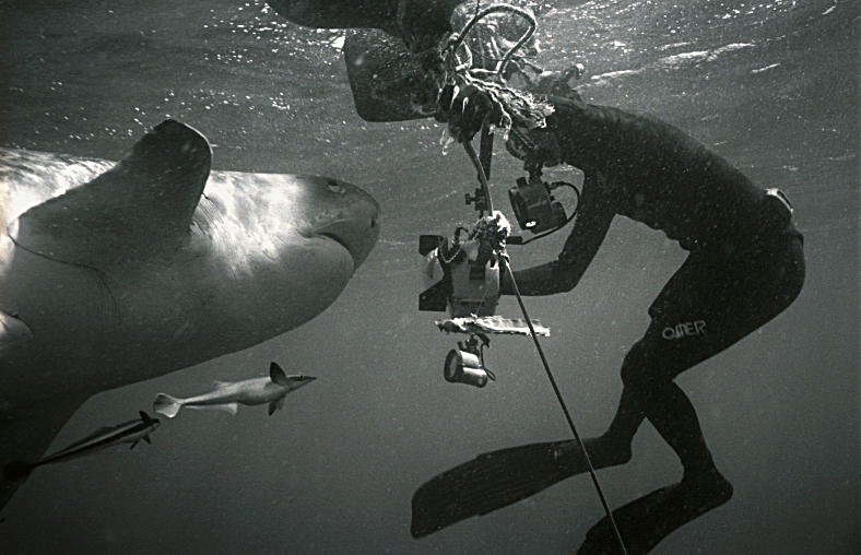 Thomas with large Tiger Shark in South Africa.  Photo by Wolfgang Leander 2007