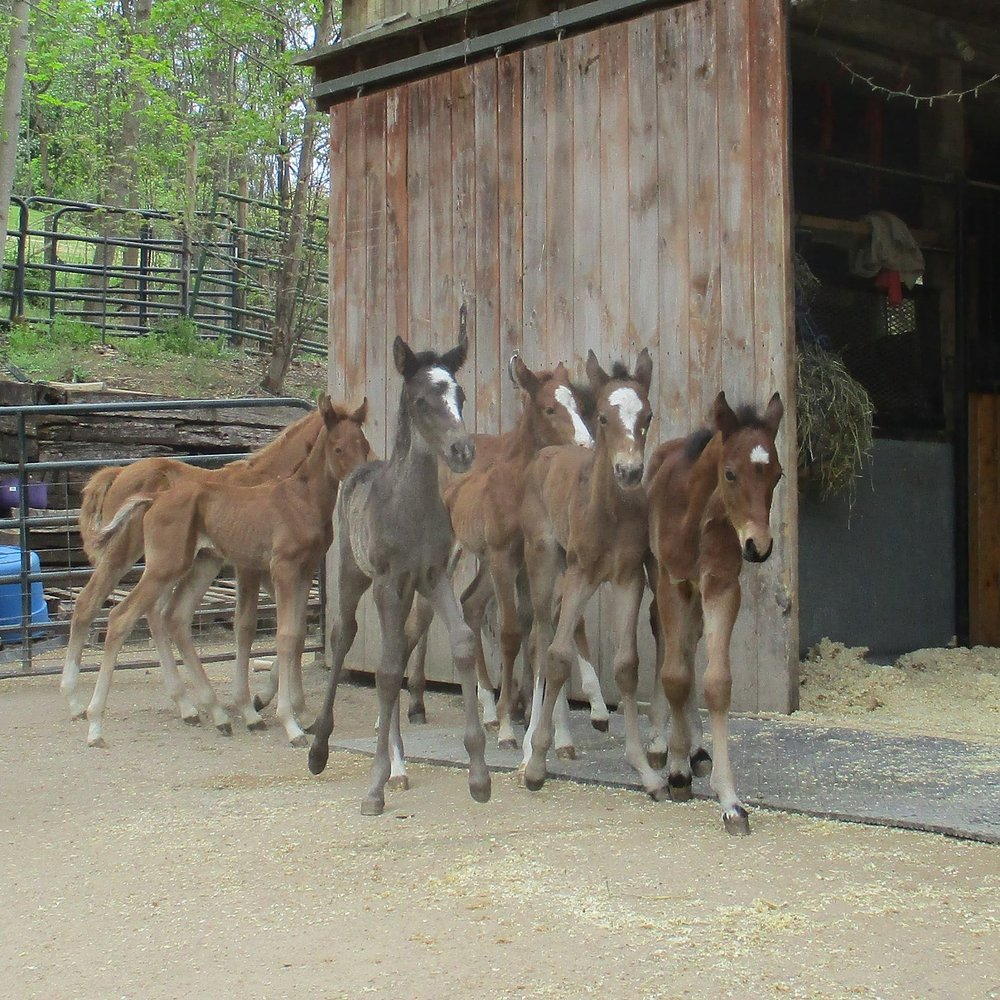 Saved! - Just a few of the over 100 foals saved this year from certain death because of the determination of Last Chance Corral