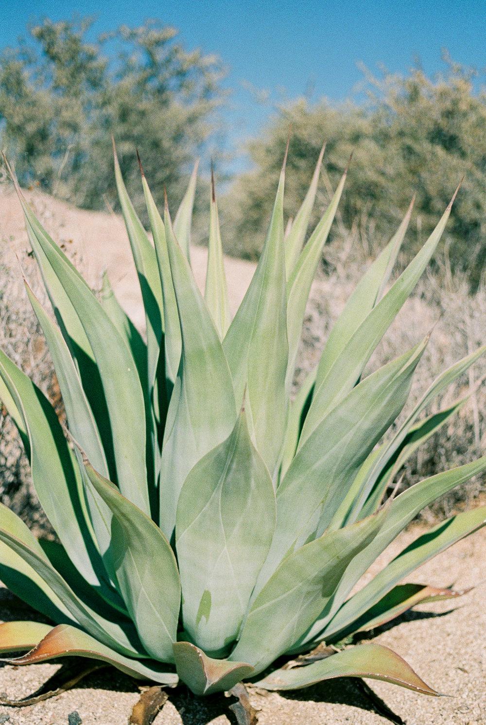 Desert Boho-62.jpg