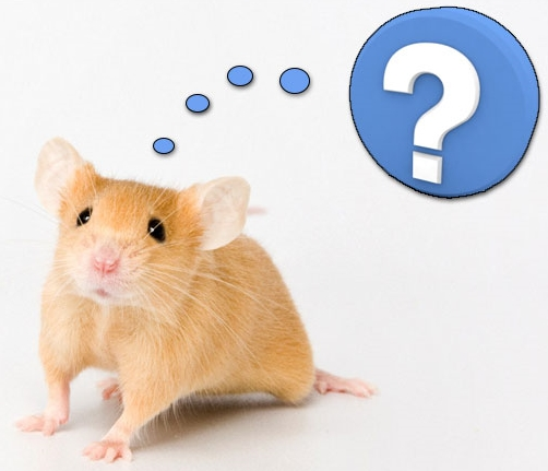mouse questions.jpg