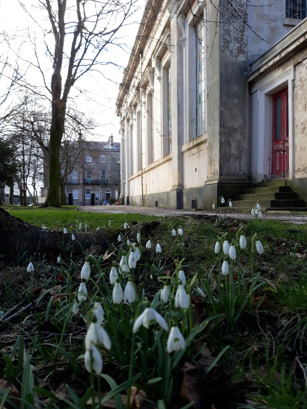 Snowdrops in Spring - a symbol of St Bride