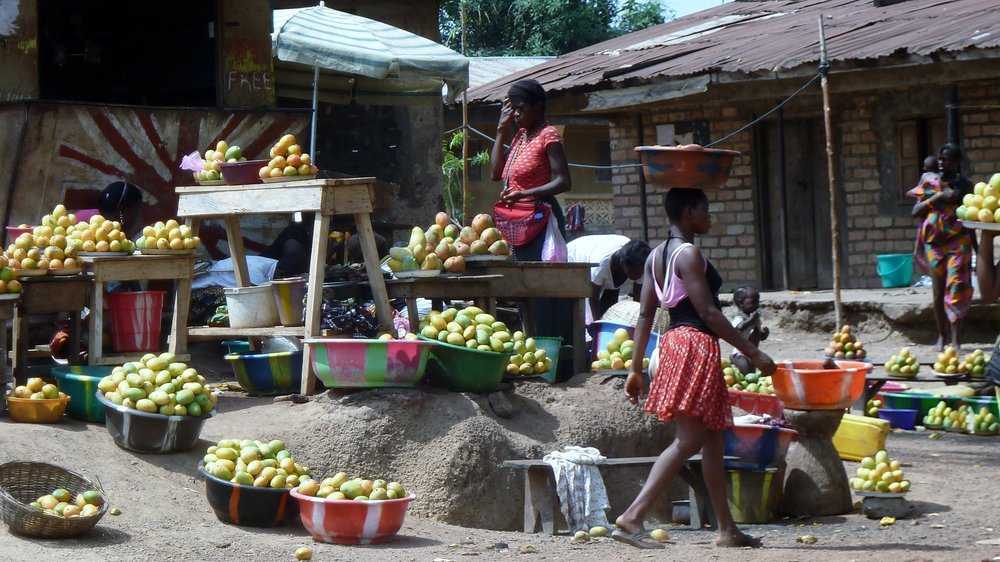 Mangoes are plentiful and cheap in Sierra Leone