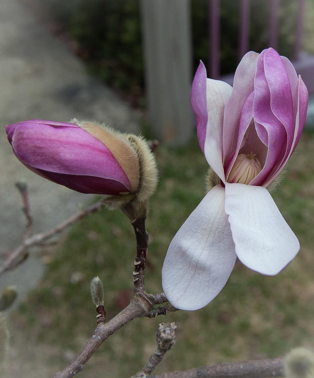 magnolia-0014.jpg