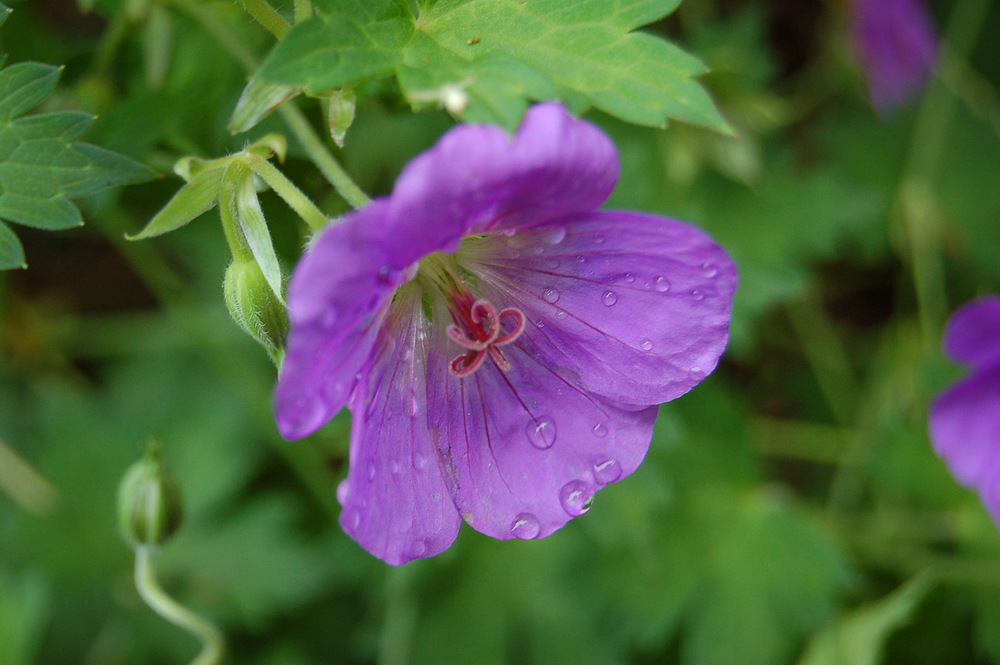 flower-0458.jpg