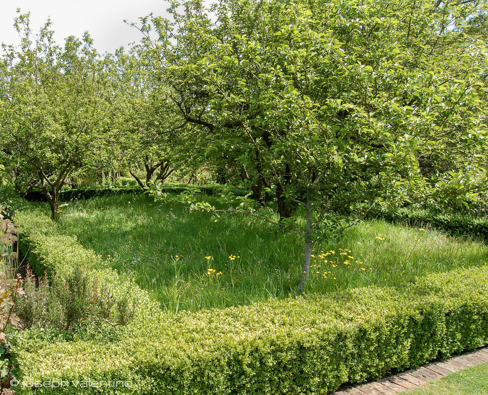 Grasses are allowed to grow long inside these box-lined sections of the orchard at The Courts in England.
