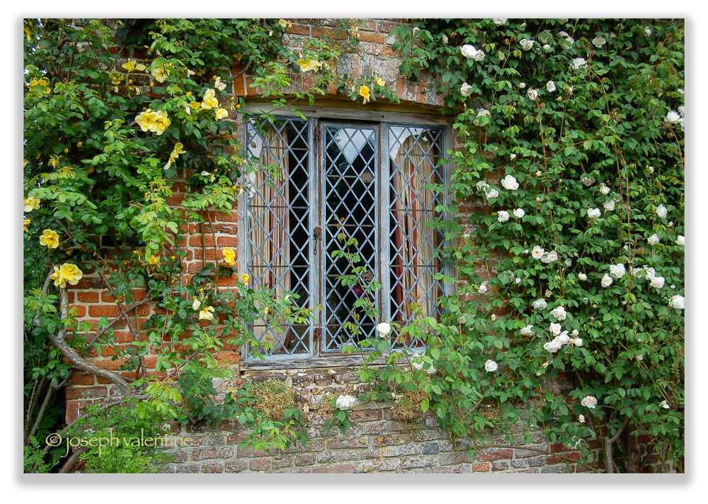 A few of Vita Sackville-West's favorite roses enhance the aged and mellow brickwork at Sissinghurst.