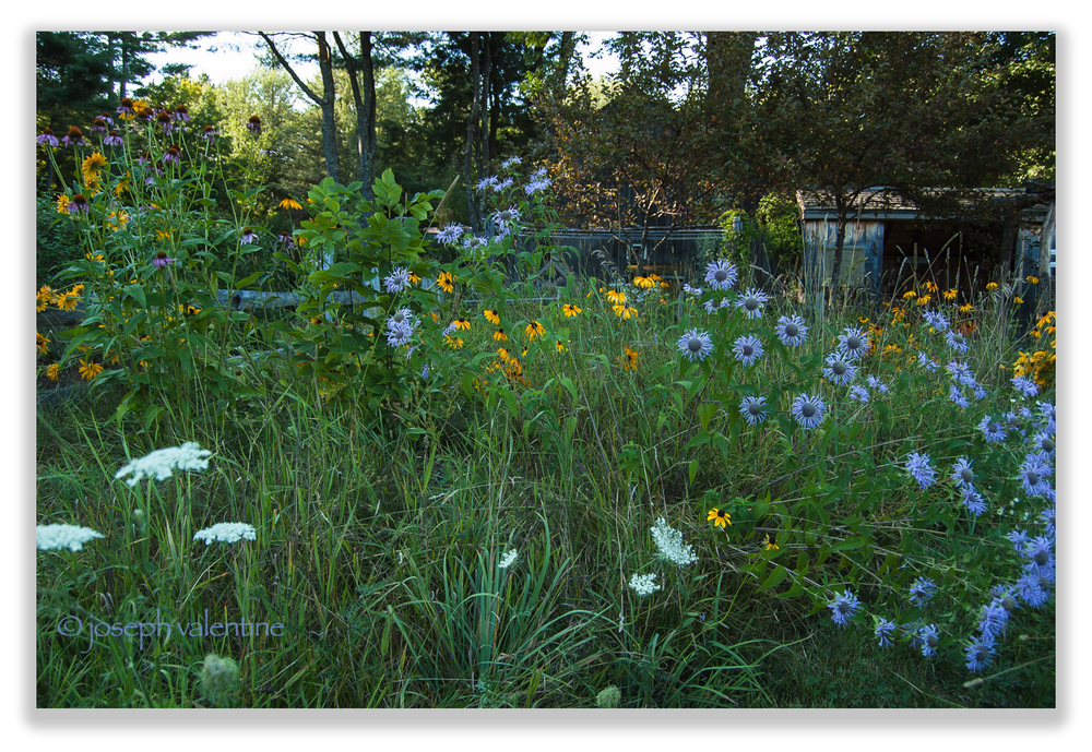 "Small grassy areas that we allow to grow ""wild"" with self-seeded plants provide some of the greatest pleasures in the entire garden as they are usually teeming with native insects and birds."