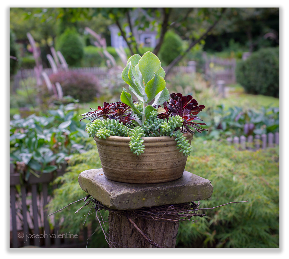 "A bowl of succulents in a Guy Wolff ""greenhouse"" pot catches the September afternoon light at Juniper Hill."