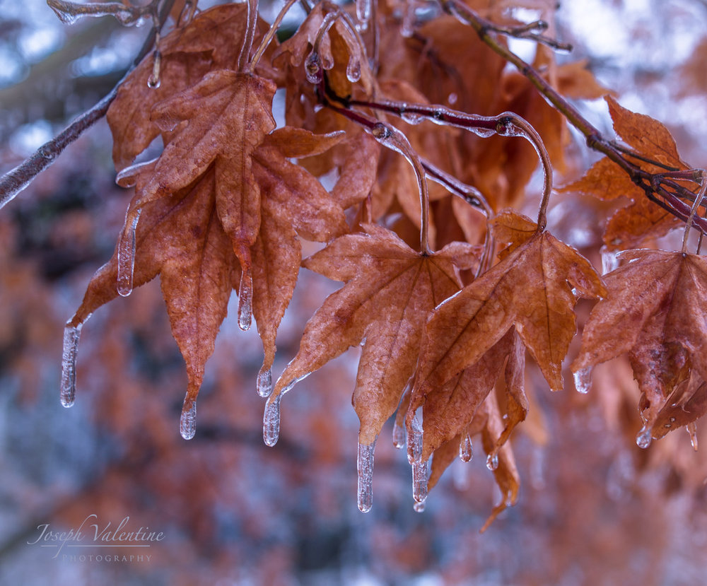Ice Storm-0117 copy.jpg