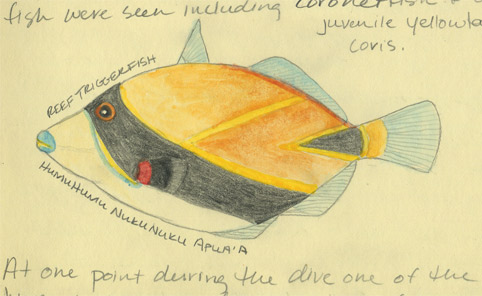 Reef Triggerfish (humuhumu-nukunuku-apua'a)