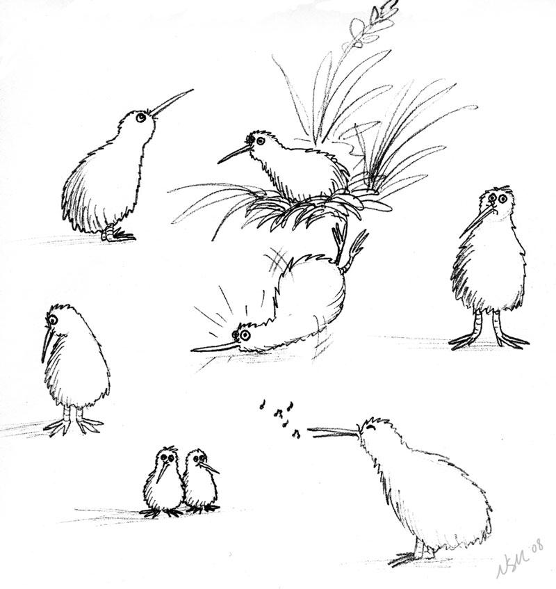 Kiwi Sketches