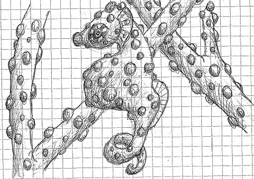 pygmy seahorse sketch