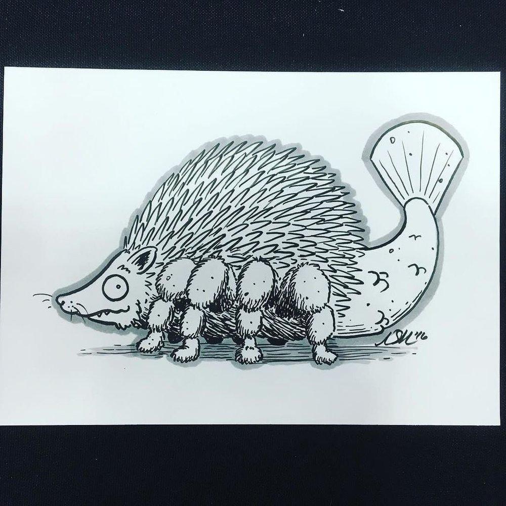 rccc-hedgehogspider.jpg