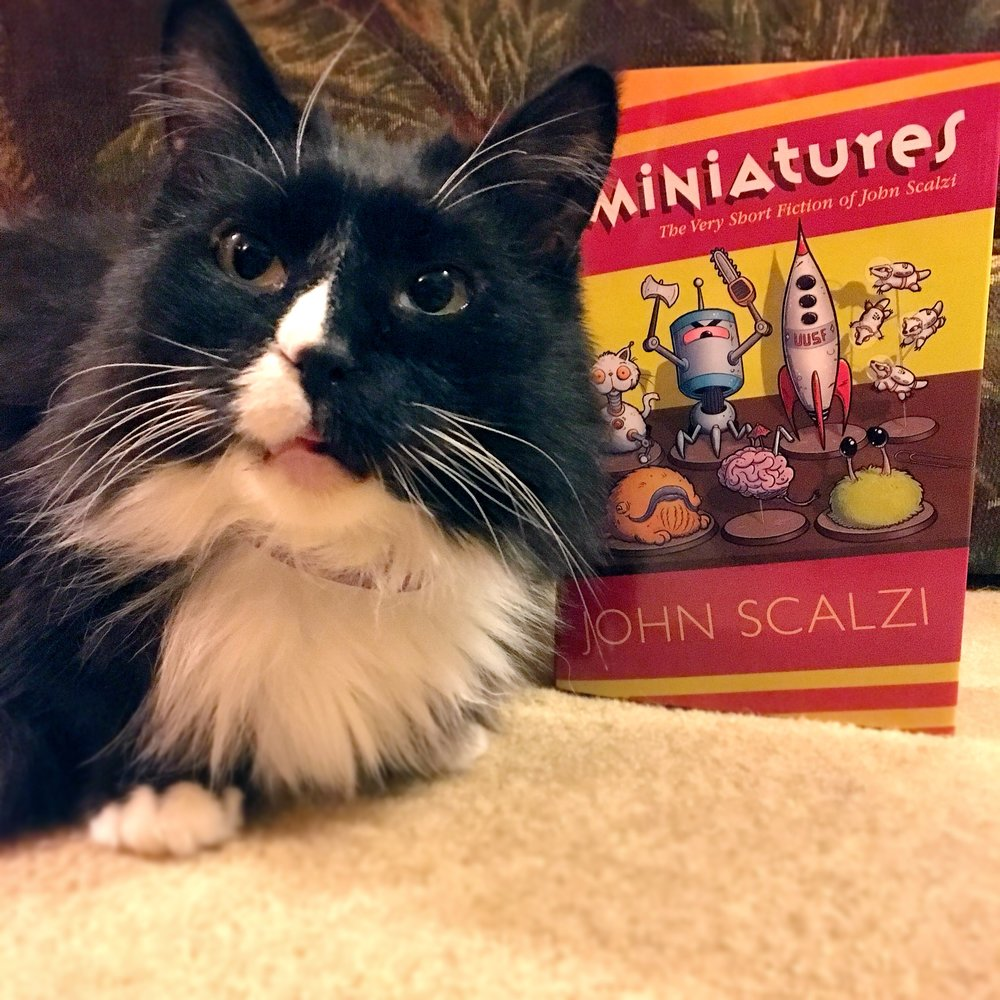 Kitteh endorsed!