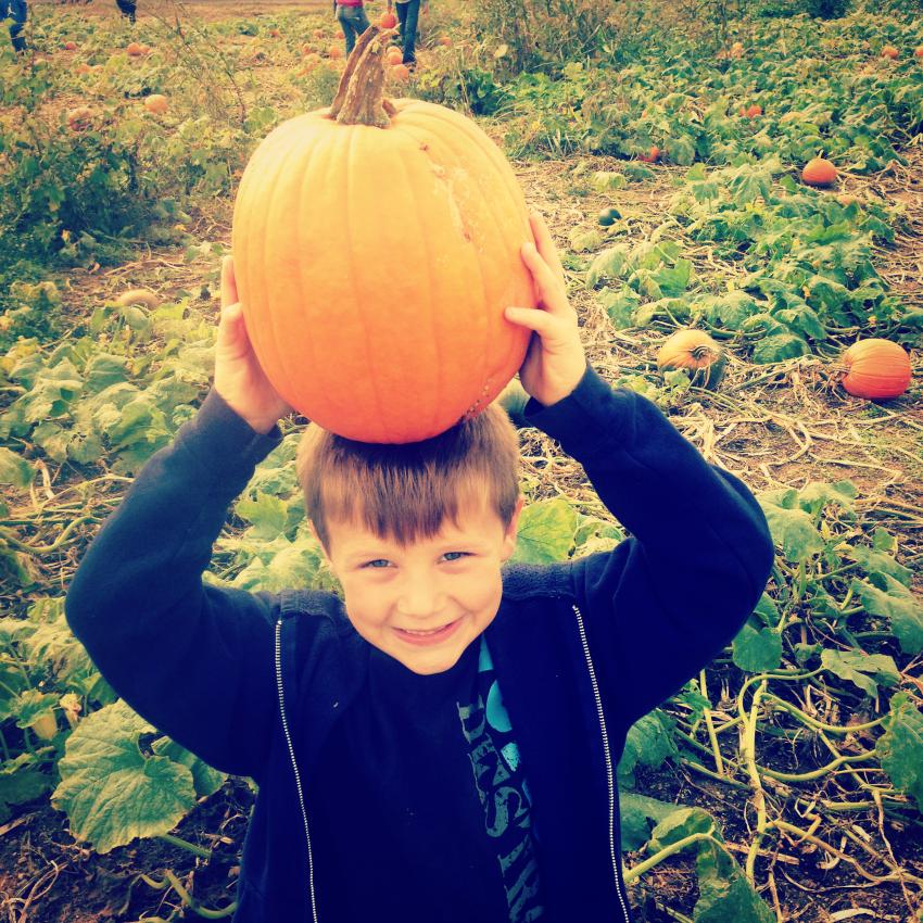 casey pumpkin