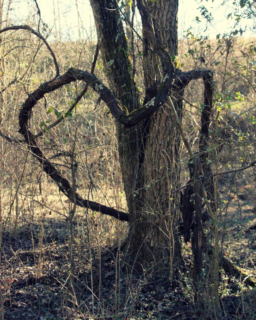 heart branch-850