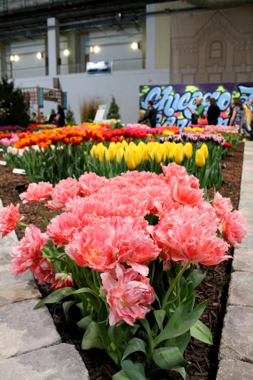 Chicago Flower And Garden Show 2014 Anna Maria Locke