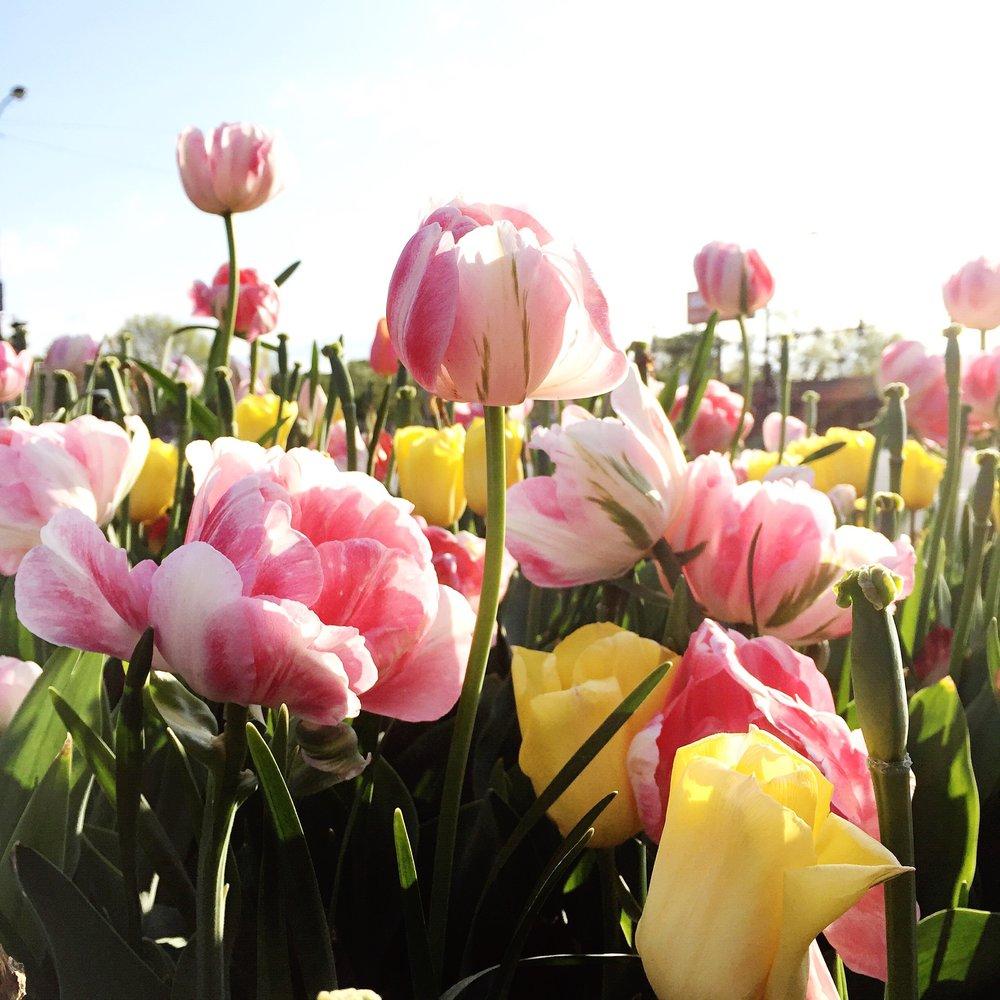 spring season.jpg