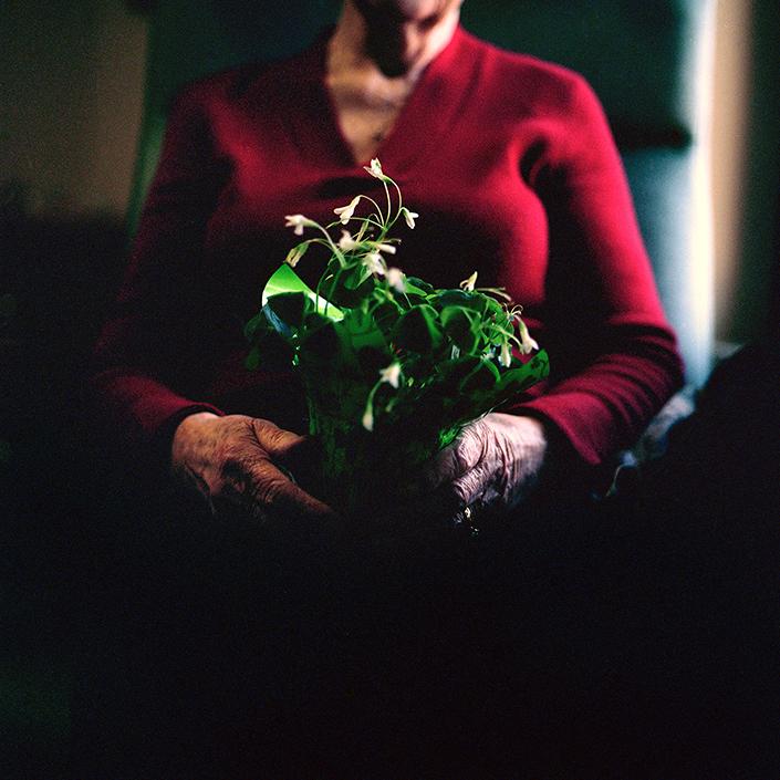 clover.jpg