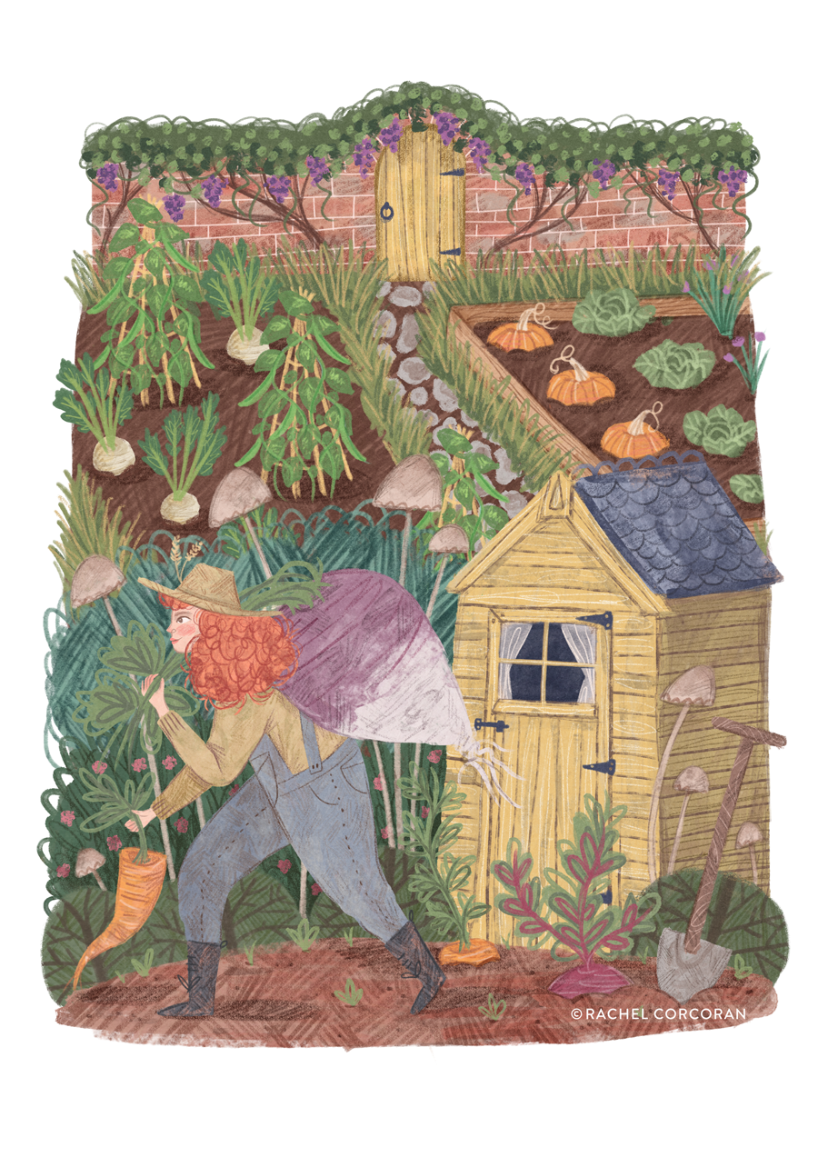 Victory Garden illustration by Rachel Corcoran