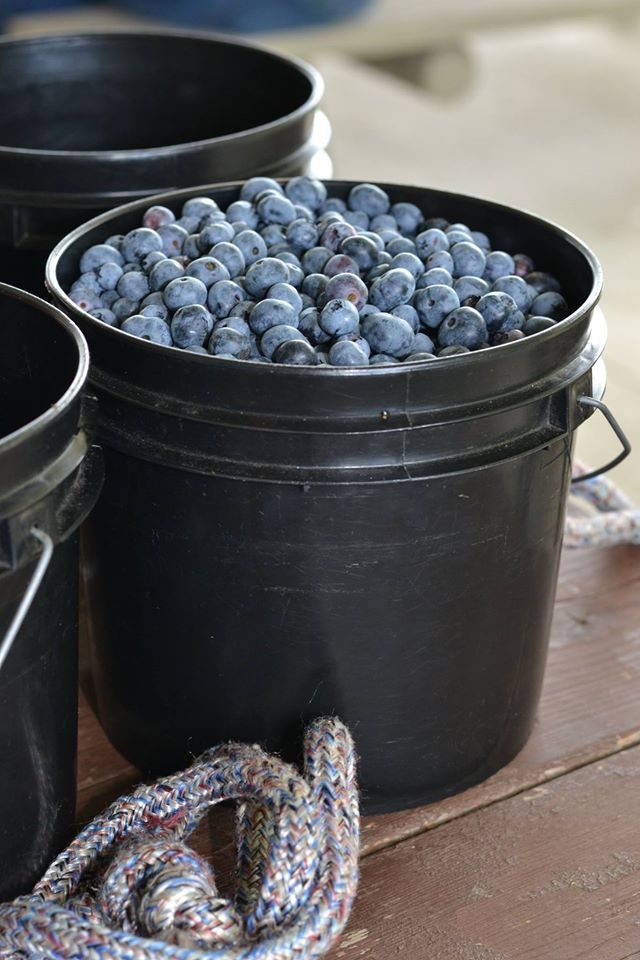 blueberry lane farms.jpg