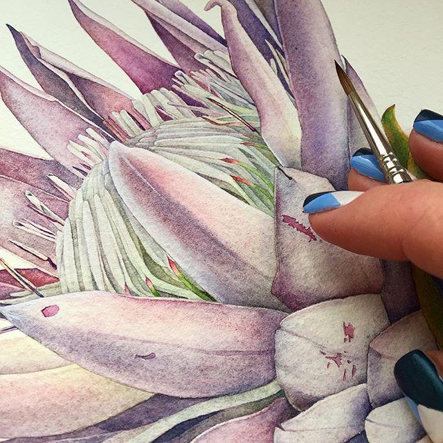 Details. King Protea Flower. • • • #watercolor #watercolour #kingprotea #protea #flower #flowers #watercolorflowers #botanicalart #botanicalart #botanicalillustration #botanical #details #fineart #commision #art #inspiration #kunst