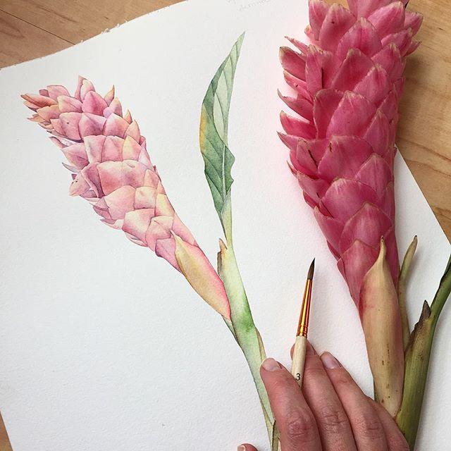 В общем не успела я со своим цветком к первому раунду #ботанический_баттл 😫 я слоу соу слоу. Интересный факт комментарием ниже 🤔