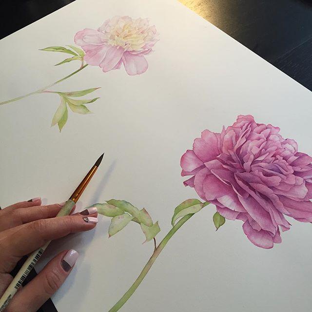 My mom's favorite flower. Peonies in process. ❤️ #art #aquarell #kunst #paintinginprogress #watercolorprocess #watercolor #waterblog #акварель #пионы #peonies #botanical #botanicalartist #botanicalart #botany #peonies #watercolorpeony #peony #flowers #watercolorflower #floral #pattern #floralpattern #commission #artcommission