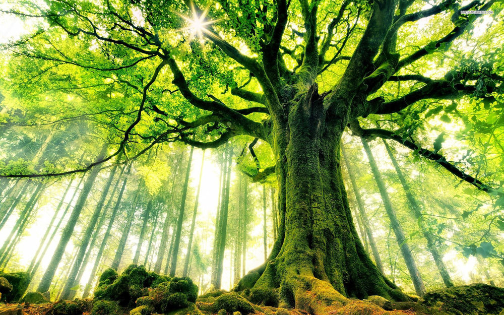 nature_big_tree_hd.jpg