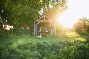 Click on the title or the photo to read an in-depth article about the sustainable practices of Common Harvest Farm