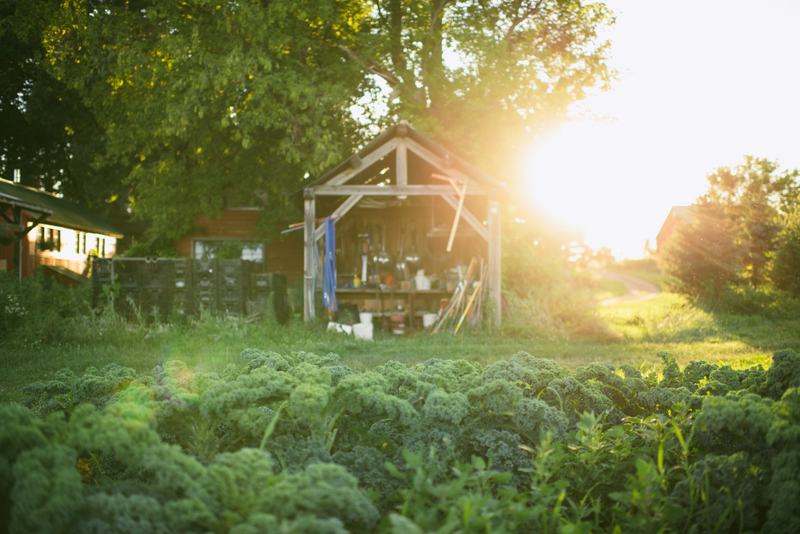 Common Harvest Farm
