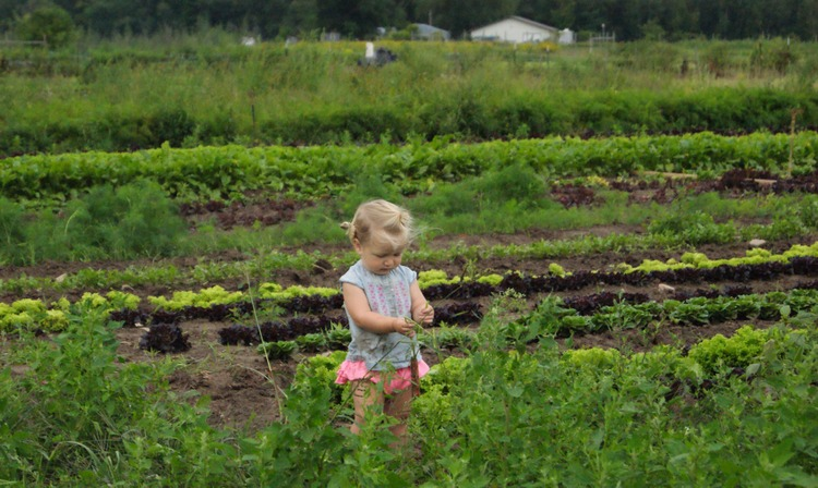 Setady Hand Farm 7.jpg