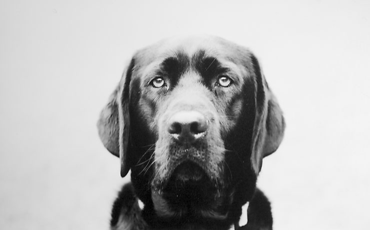 mallon_dogs_028.JPG