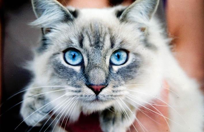 mallon_cats_001.JPG