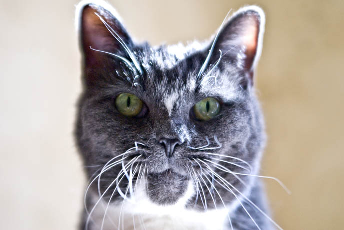 mallon_cats_002.JPG