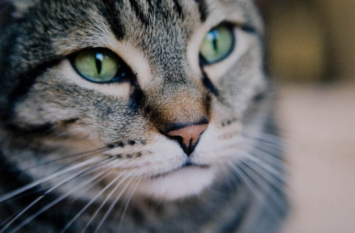 mallon_cats_005.JPG