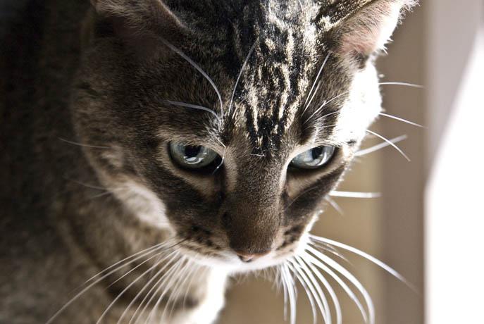 mallon_cats_006.JPG