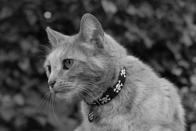 mallon_cats_003.JPG