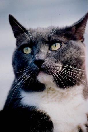 mallon_cats_004.JPG