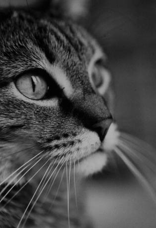 mallon_cats_011.JPG