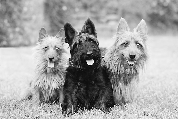 mallon_dogs_001.JPG